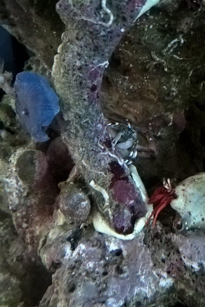 20160504 Koralleneinzug 02